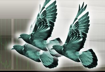 サーバー/ネットワークインフラ監視サービス Pingeonsリリース