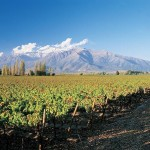 Concha y Toro チリワイン