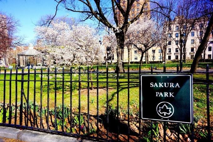 海外 桜 sakura park