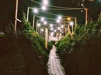クリスマスツリーの香りに包まれ始めたニューヨーク